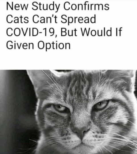 new study cats cant spread covid but would if they could