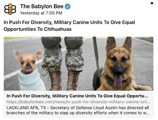 babylon bee push for diversity military chihuahuas over shepards
