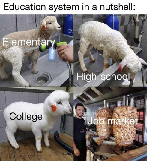 education system nutshell elementary hs sheep college jobs market