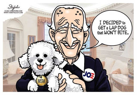 joe biden lap dog wont bite mainstream media poodle