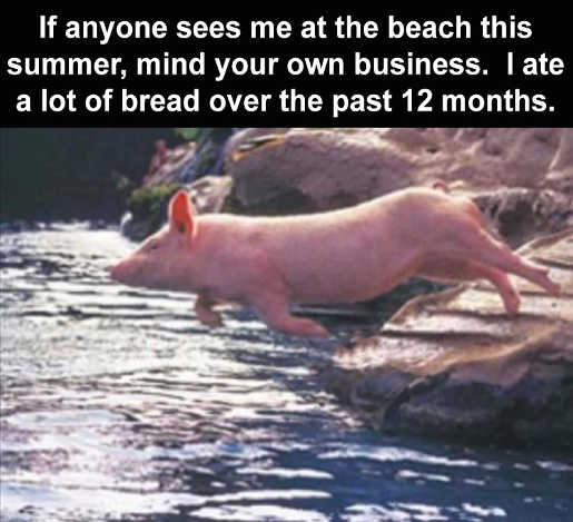 pig at beach swimming bread last 12 months