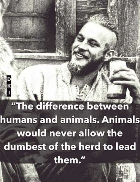 quote difference between humans animals dont pick dumbest to lead them herd