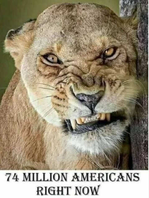 message 74 million americans right now snarling lion
