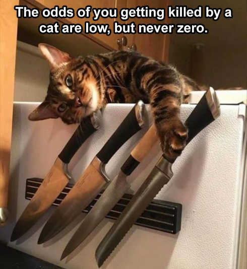 odds of you killed by cat low never zero knives