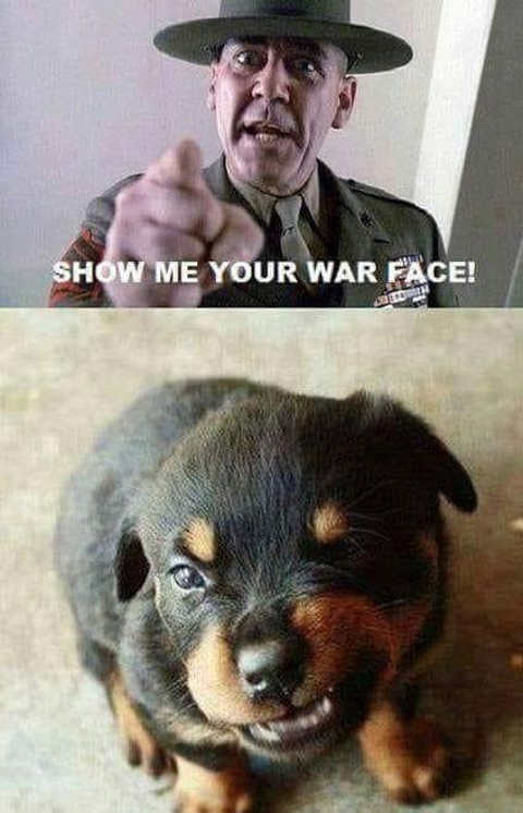 puppy full metal jacket show me your war face
