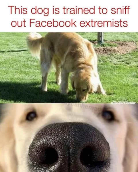 dog nose trained to sniff facebook extremists