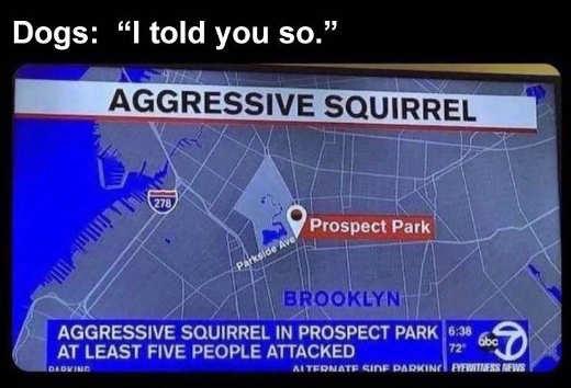 quote dog aggressive squirrel told u so