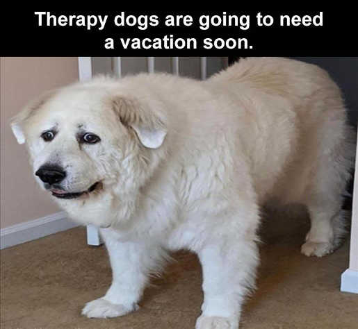 therapy dogs need vacation soon