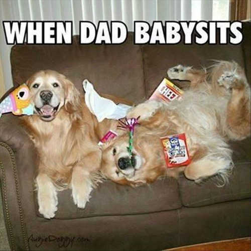 when dad babysits dog retrievers party