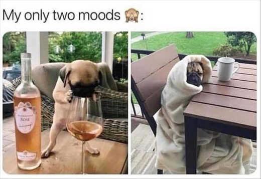dog my two moods wine coffee