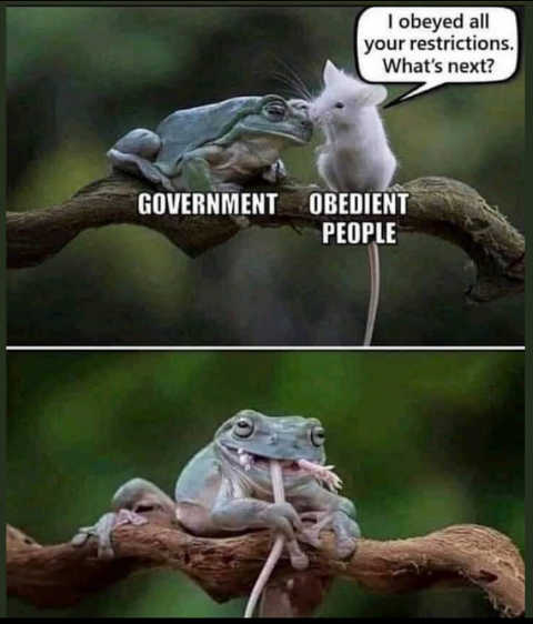 frog mouse obedient people government swallowed