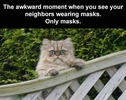 cat see neighbors wearing masks only