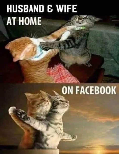 cats fighting married couple home titanic facebook