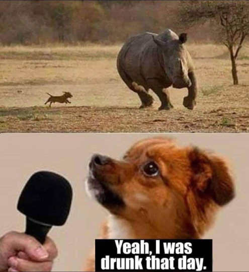 dog chasing rhino drunk that day