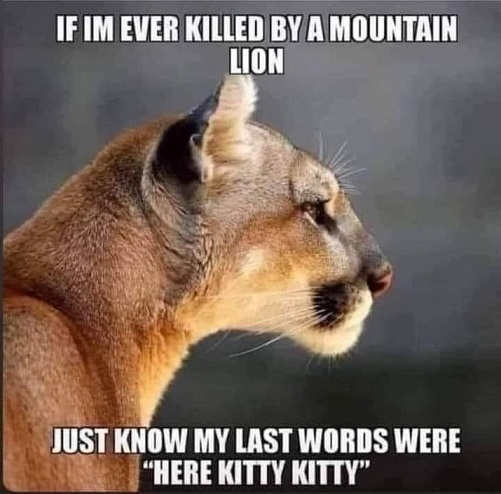 if ever killed by mountain lion last words here kitty kitty