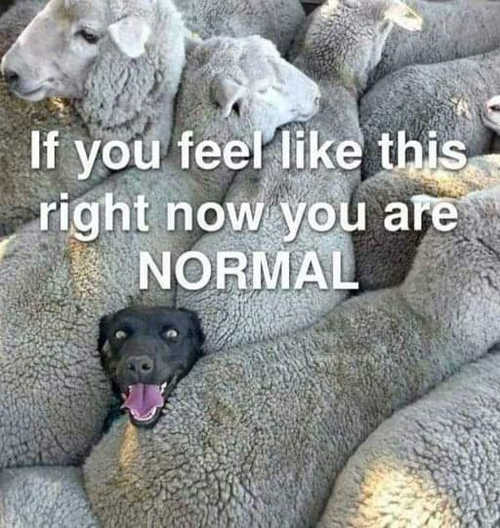 https://i2.wp.com/politicallyincorrecthumor.com/wp-content/uploads/2021/09/message-dog-sheep-feel-like-this-right-now-youre-normal.jpg?w=500&ssl=1