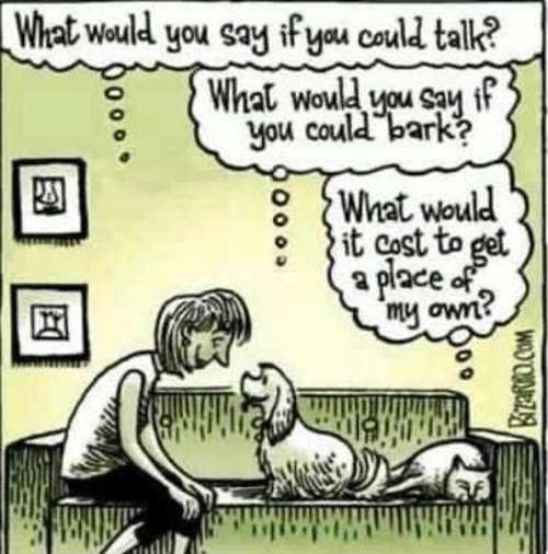 owner dog bark speak cat place of own