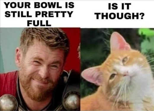 thor cat bowl still full is it though