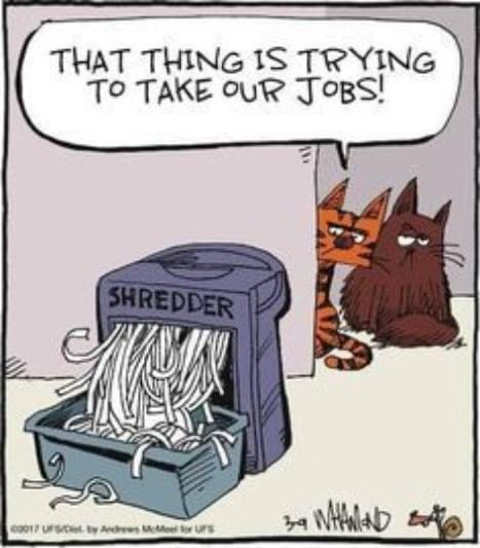 cats shredder trying to take our jobs