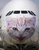 gatos-linhas-aereas