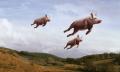 porcos voadores