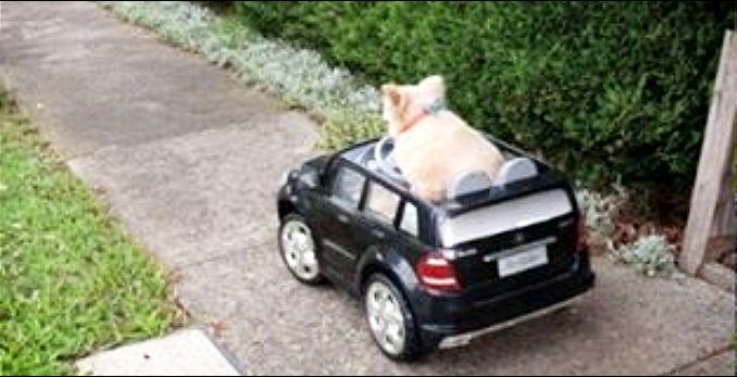 Pas vozio Mercedes, policija ga zaustavila