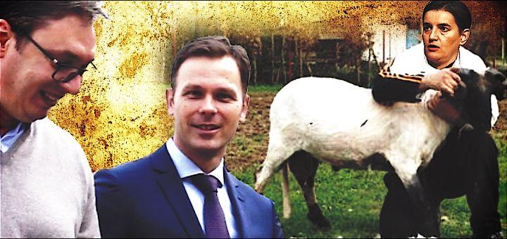 Šišanje ovaca od Nove godine: Plaćate porez i na šupe, svinjce, bunare, nadstrešnice…