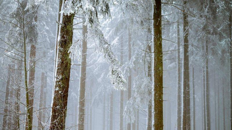Danas u 11.02 sata zvanično počinje zima