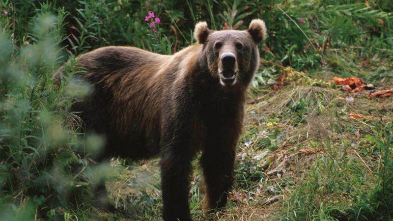 Snima se film po istinitoj priči o medvedu koji je uginuo od kokaina