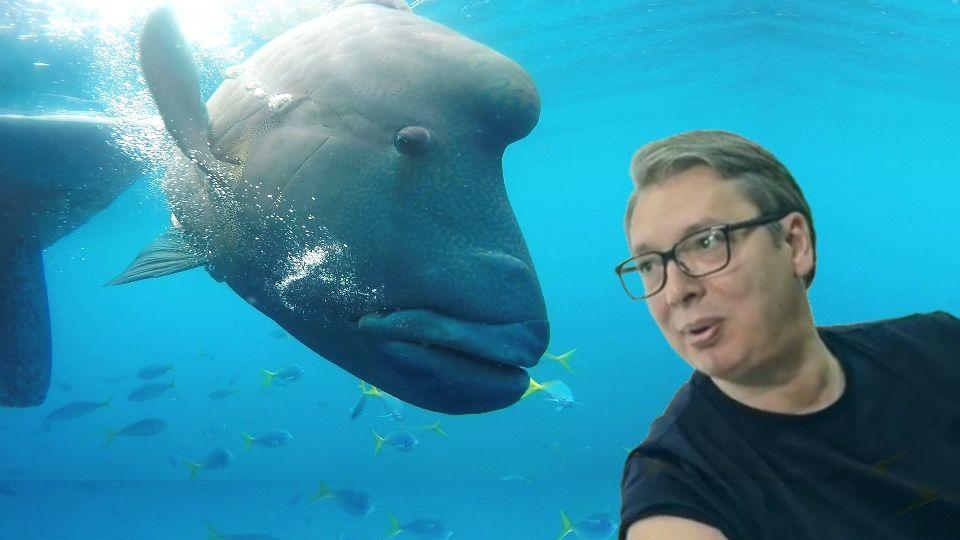 """""""Vučić duže može da izdrži pod vodom nego da ne slaže"""""""