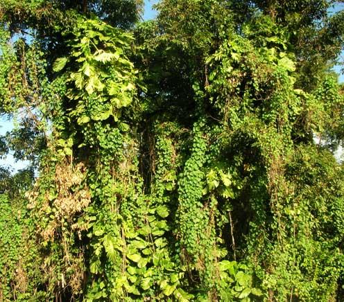 Rainforest scenery in Haiku