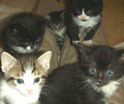 5 kittens