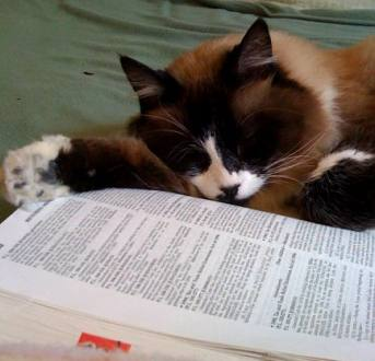 Sue's cat Bandit snoozes on IRS tax codes