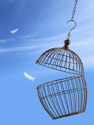 birdcage-open