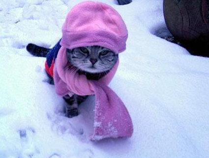 cat_cold