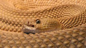 George Conway. Snake?