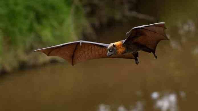 coronavirus bat