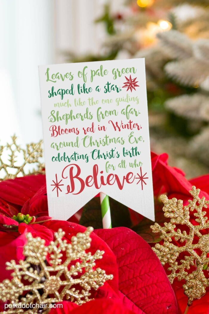 Cute Christmas Neighbor Gift ideas-a Poinsettia decorated with ornament tags and a Poinsettia poem attached - from polkadotchair.com