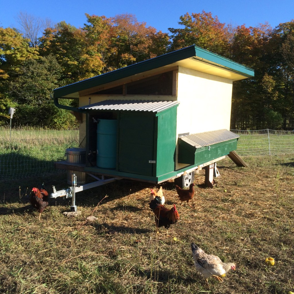 A fine feature of our moveable coop is rainwater collection and dispersal through drinkers located below the nest boxes.