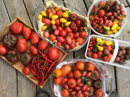 Heirloom tomato bounty at Polka Dot Hen Produce