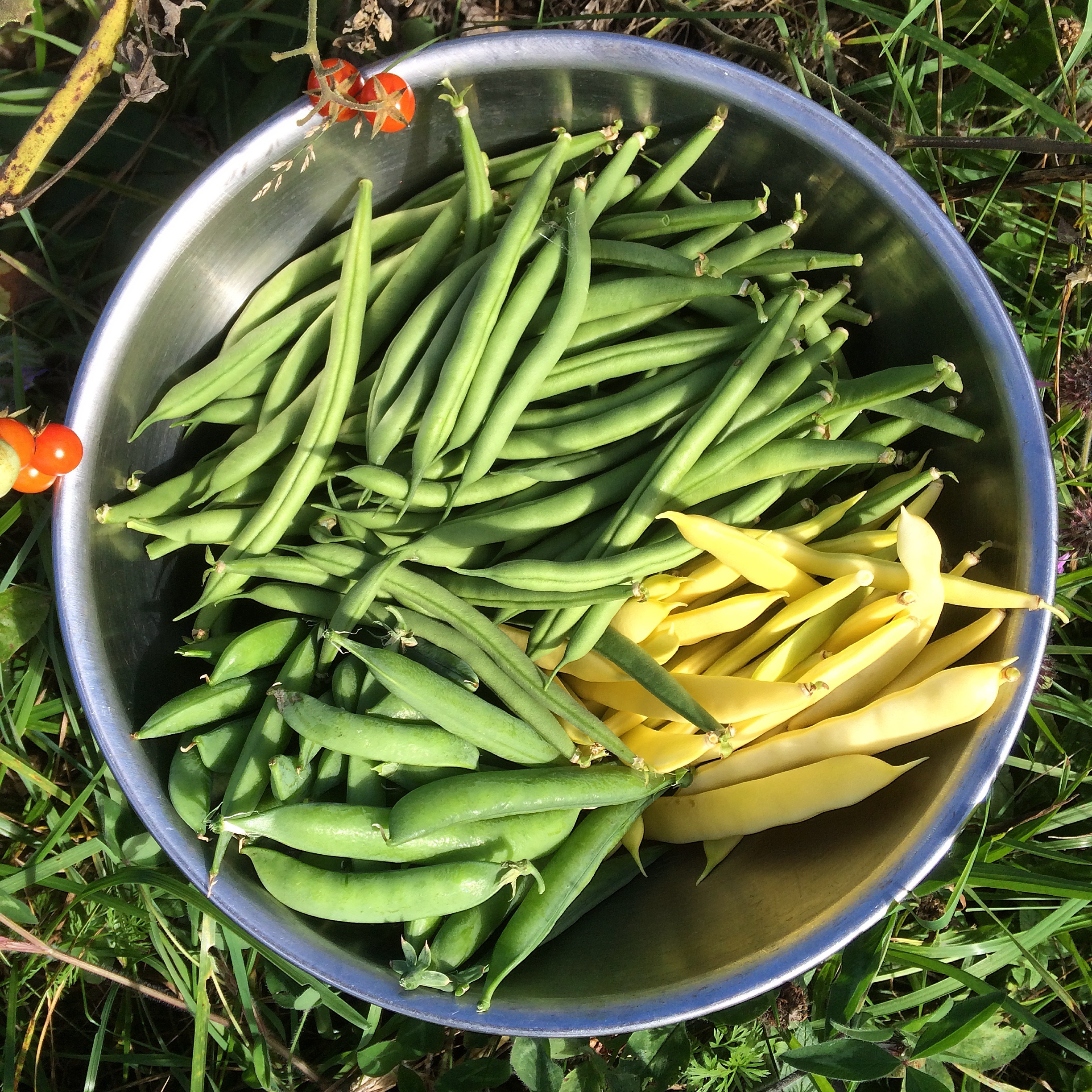 Green beans, yellow broad beans and peas
