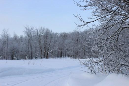 snowy lane and trees Bruce Peninsula Polka Dot Hen Produce