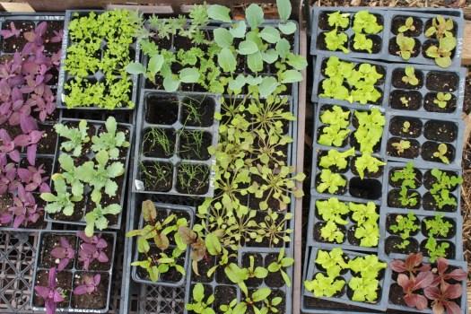 seedlings fresh produce wiarton