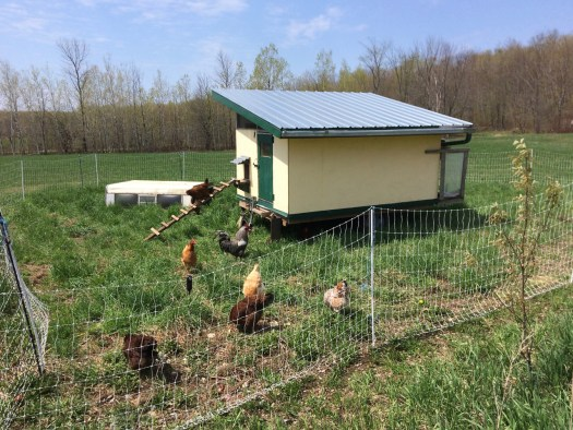 chicken mobile coop polka dot hen produce
