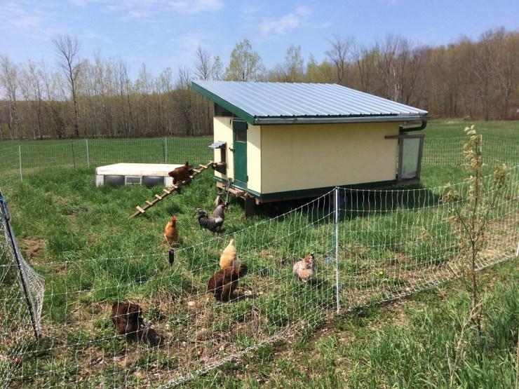 chicken mobile coop polka dot hen produce