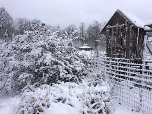 snowfall birds nest garden farm
