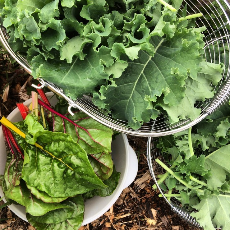 fresh vegetables Polka Dot Hen Produce kale chard