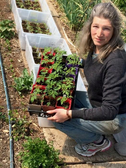 Erin Gundy tomato plants Polka Dot Hen Produce