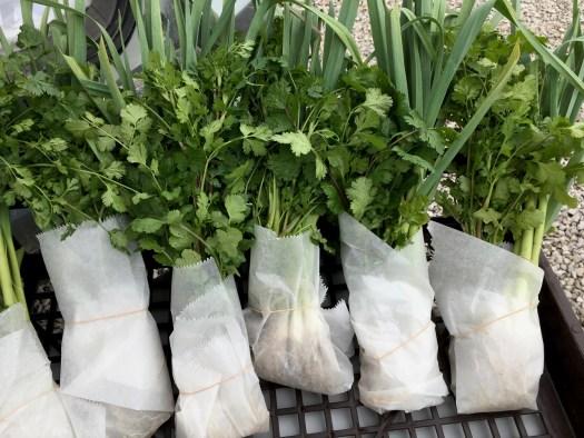 Polka Dot Hen Produce fresh vegetables cilantro garlic