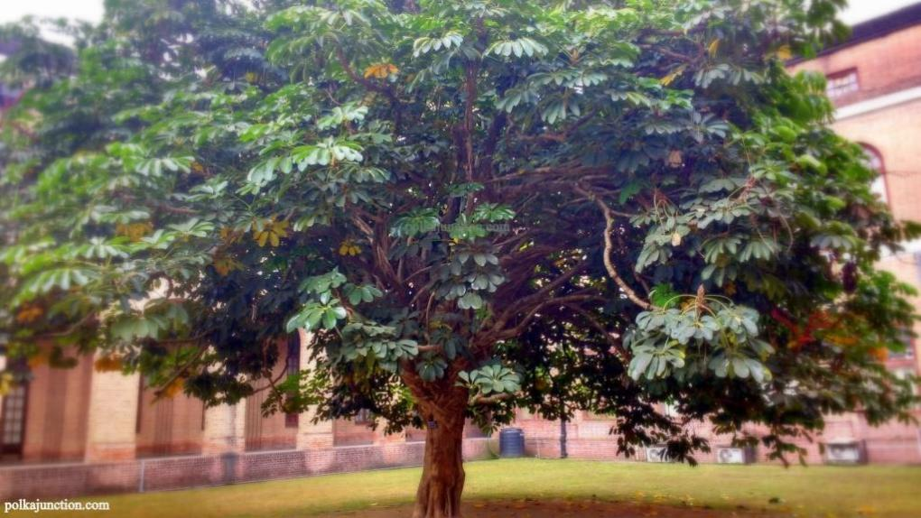 Forest Research Institute's Architecture : Courtyard